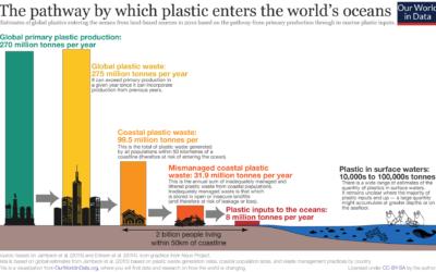 How plastics enter the food web