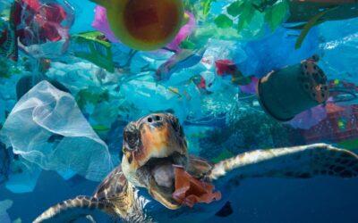 Microplastics found in gut of every sea turtle around the world